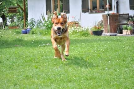 Hund in Garten