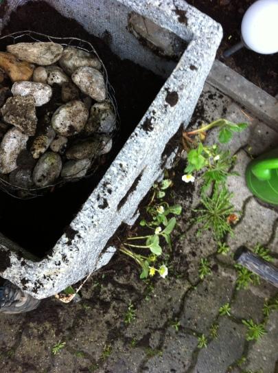 Erdbeerfass Bepflanzung