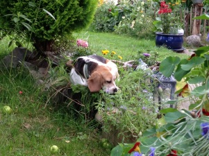 Hund auf Blumentopf