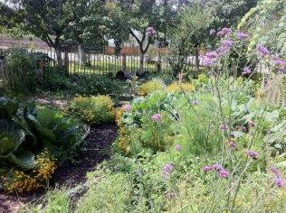 Selbstversorger Gartenglück