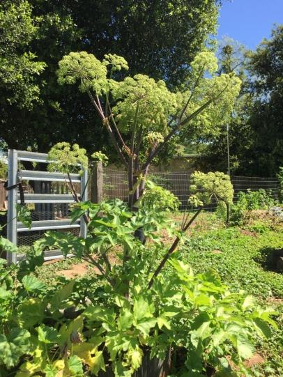 Engelwurz mit Gartentor