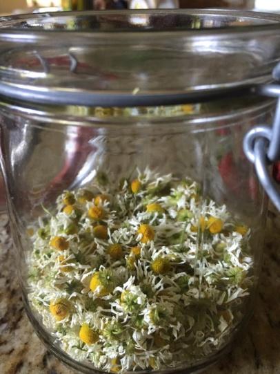 Getrocknete Kamillenblüten im Glas