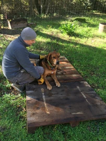 Hundehütten Anpassung
