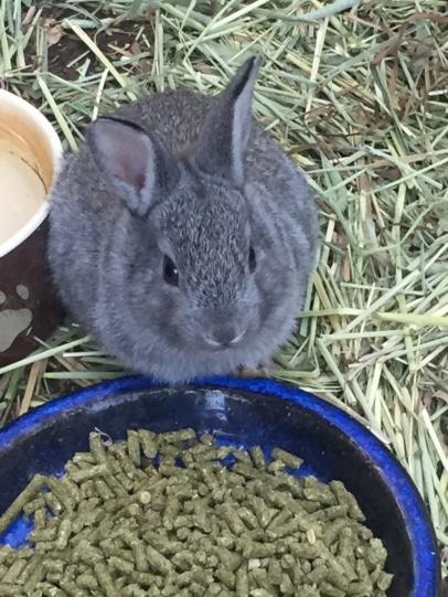Kaninchenkind