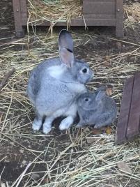 Kaninchenmama