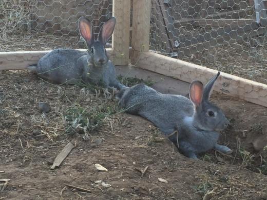 Kaninchen-Siesta