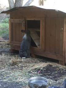 Neues Kaninchenhaus