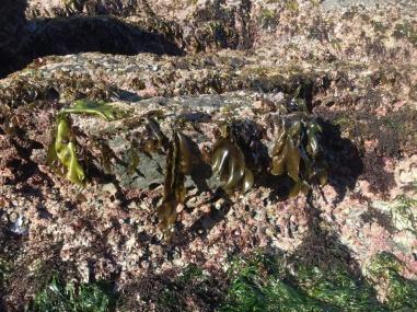 Verschiedene Algen und Seegras