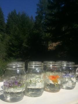 Blütenessenzen ansetzen