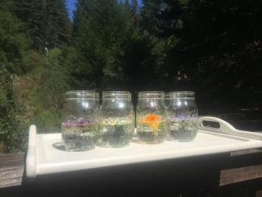 Blütenessenzen in der Sonne