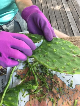 Kaktus bearbeiten
