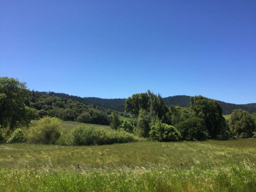 der_kalifornische_odenwald