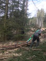 Fichtenäste aus dem Wald holen